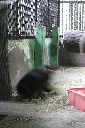 shanghai_zoo-179