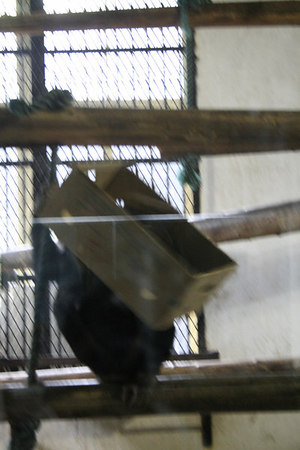 shanghai_zoo-173