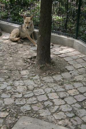 shanghai_zoo-055