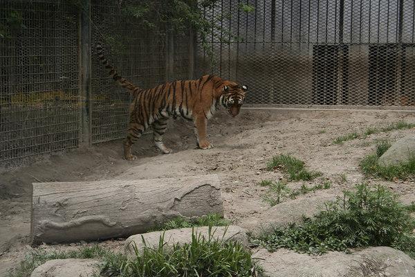 shanghai_zoo-025