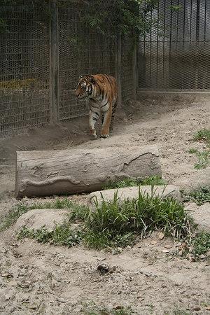 shanghai_zoo-024