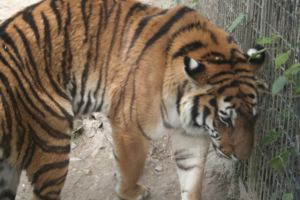 shanghai_zoo-029