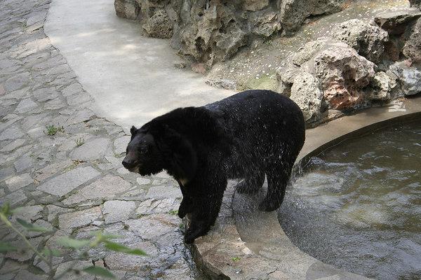 shanghai_zoo-088