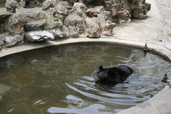 shanghai_zoo-066
