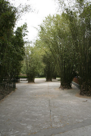 shanghai_zoo-157