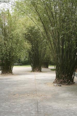shanghai_zoo-156
