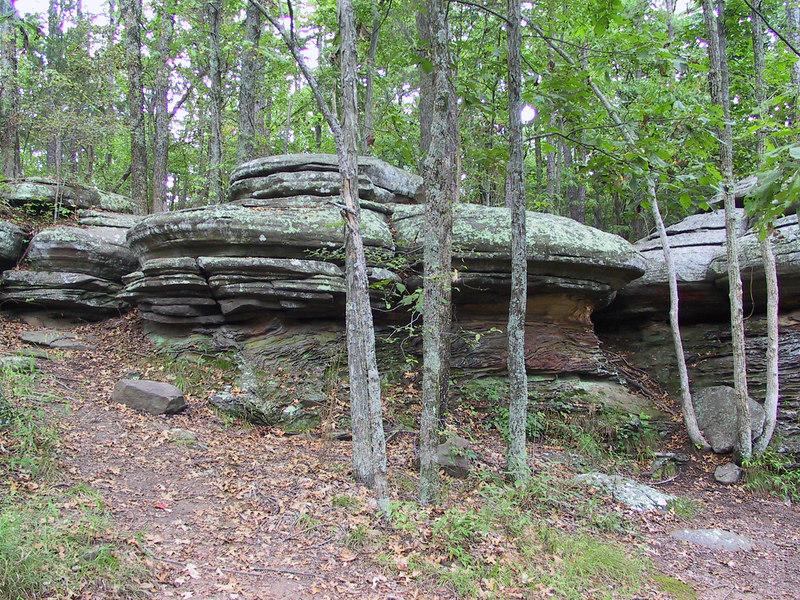 """""""Mushroom Rocks II"""""""
