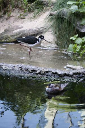 monterey-bay-aquarium045