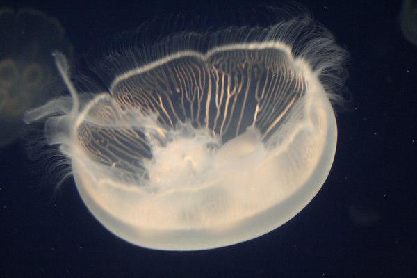 monterey-bay-aquarium204