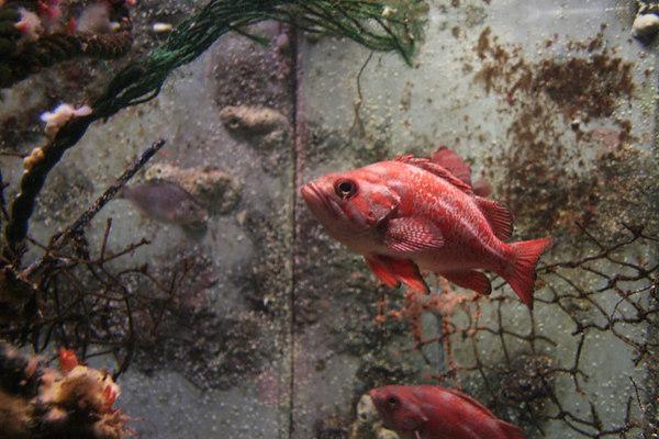 monterey-bay-aquarium072