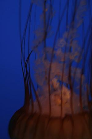monterey-bay-aquarium155