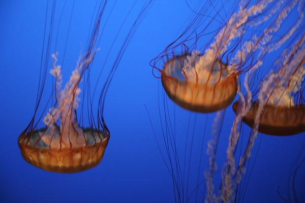 monterey-bay-aquarium159