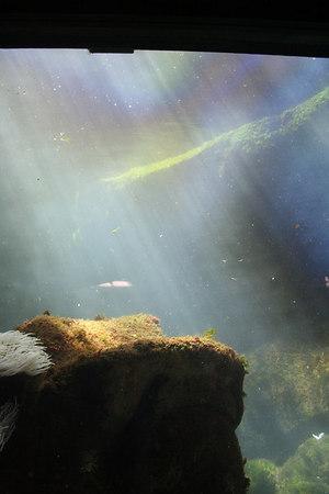monterey-bay-aquarium011
