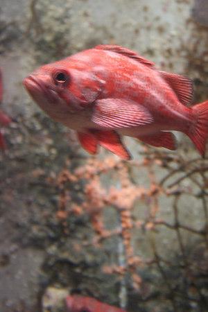 monterey-bay-aquarium069