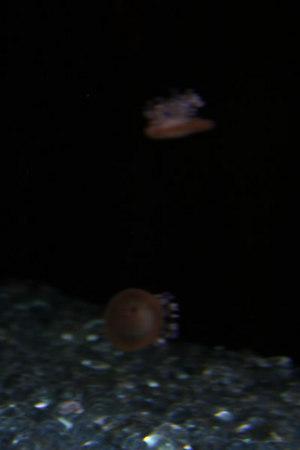 monterey-bay-aquarium247