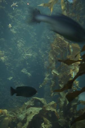 monterey-bay-aquarium122