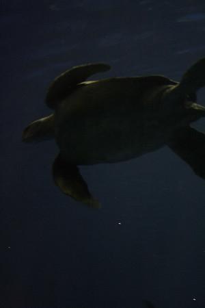 monterey-bay-aquarium169