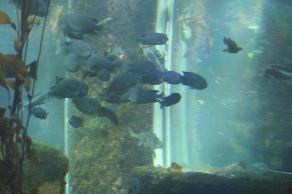 monterey-bay-aquarium118
