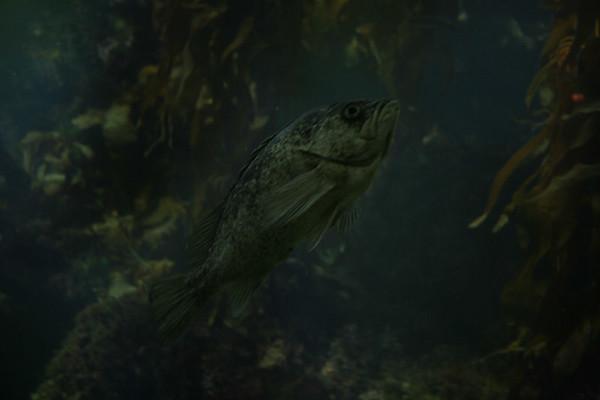 monterey-bay-aquarium120