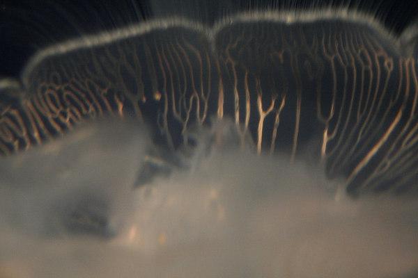 monterey-bay-aquarium200