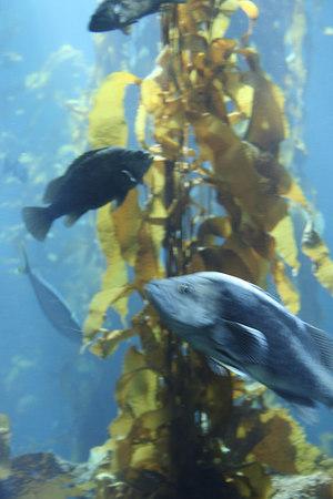 monterey-bay-aquarium029