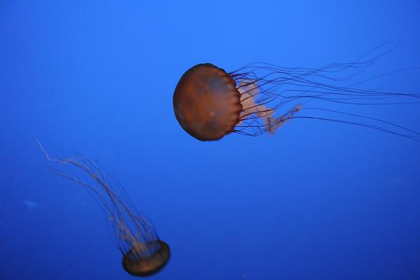 monterey-bay-aquarium163
