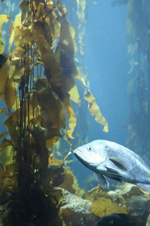 monterey-bay-aquarium028