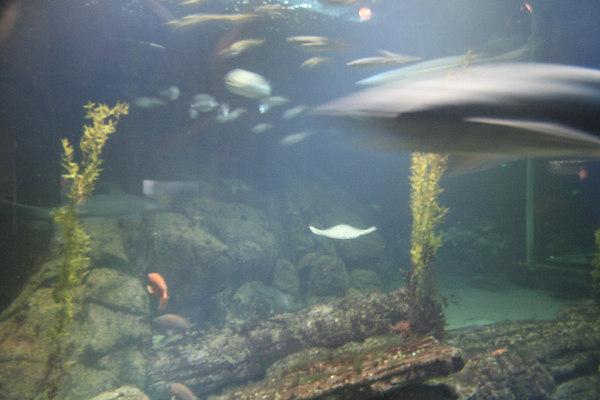 monterey-bay-aquarium075