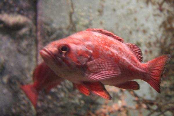 monterey-bay-aquarium070