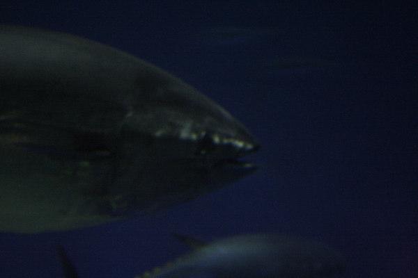 monterey-bay-aquarium182