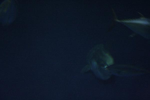 monterey-bay-aquarium171