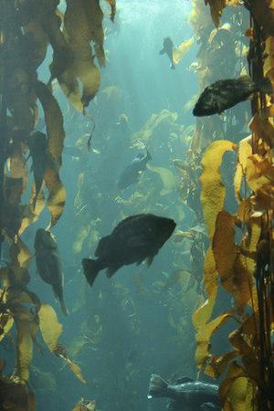 monterey-bay-aquarium027