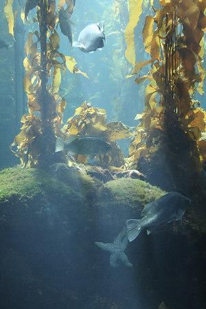 monterey-bay-aquarium032