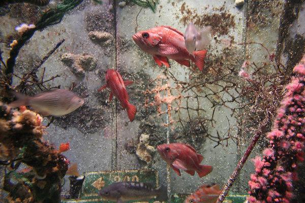 monterey-bay-aquarium067