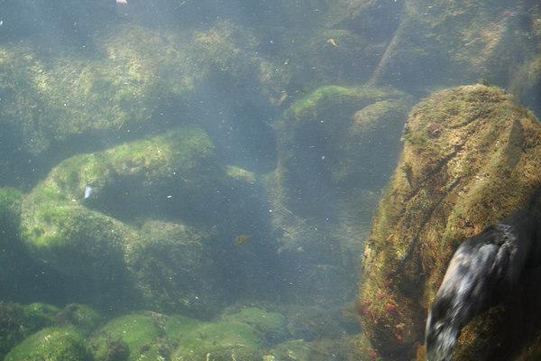 monterey-bay-aquarium014