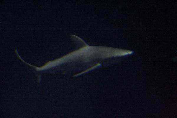monterey-bay-aquarium186