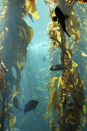 monterey-bay-aquarium023