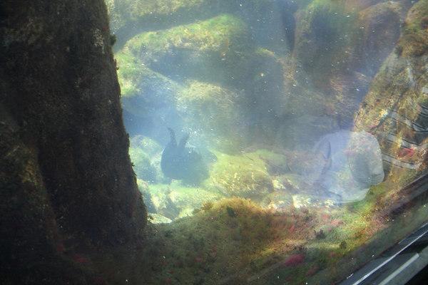 monterey-bay-aquarium003