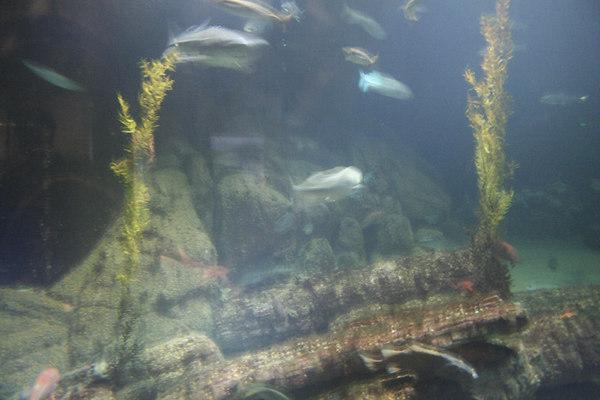 monterey-bay-aquarium076