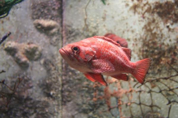 monterey-bay-aquarium071