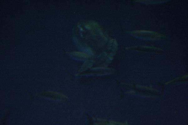 monterey-bay-aquarium179