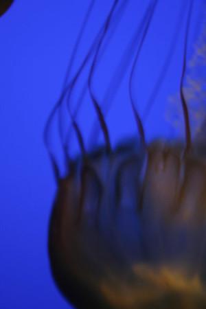 monterey-bay-aquarium156