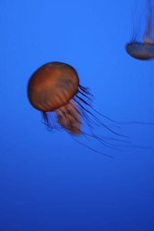monterey-bay-aquarium144
