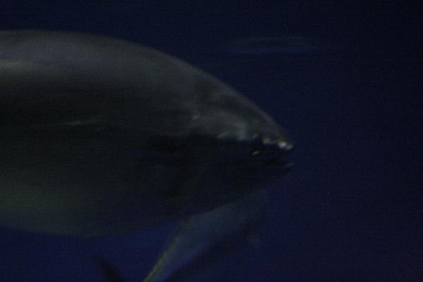monterey-bay-aquarium183