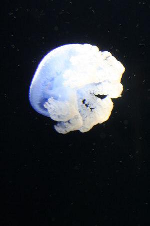 monterey-bay-aquarium233