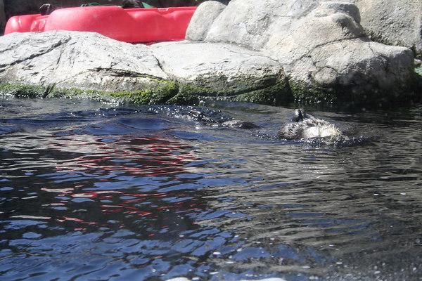 monterey-bay-aquarium021