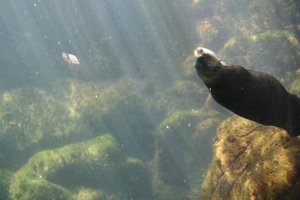 monterey-bay-aquarium019