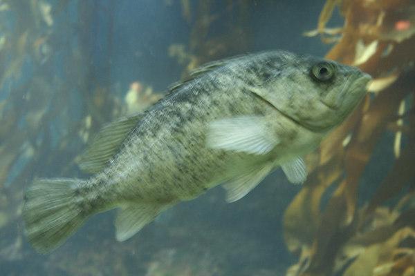 monterey-bay-aquarium114