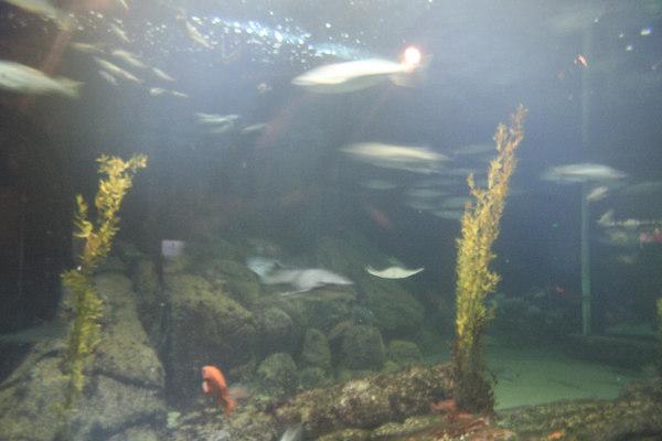 monterey-bay-aquarium073