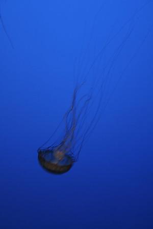 monterey-bay-aquarium145
